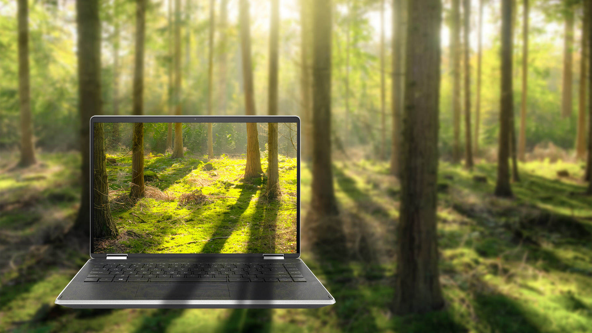 La nature intégrée à un ordinateur portable